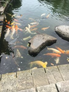 グラバー園の鯉