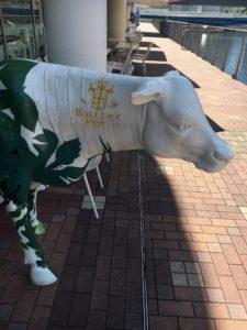横浜バターの牛