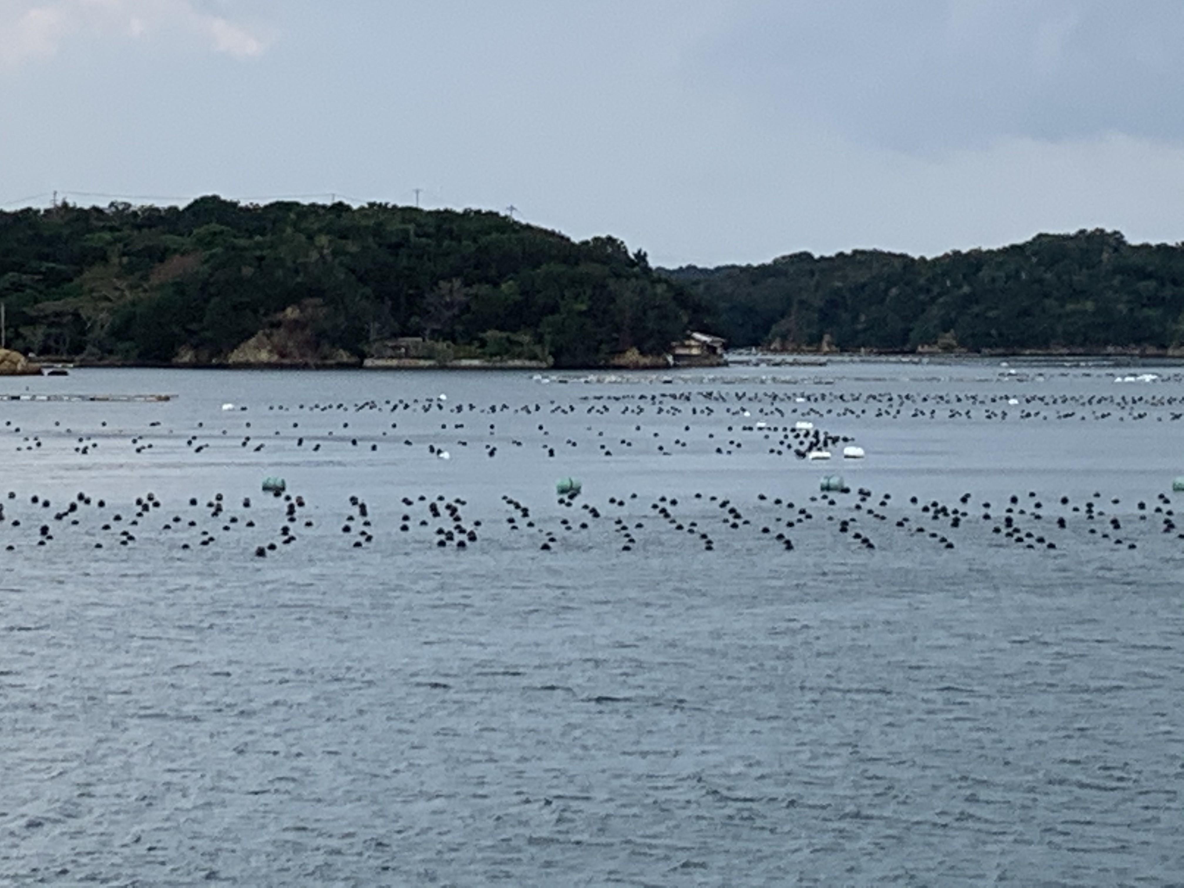 賢島の遊覧船の画像